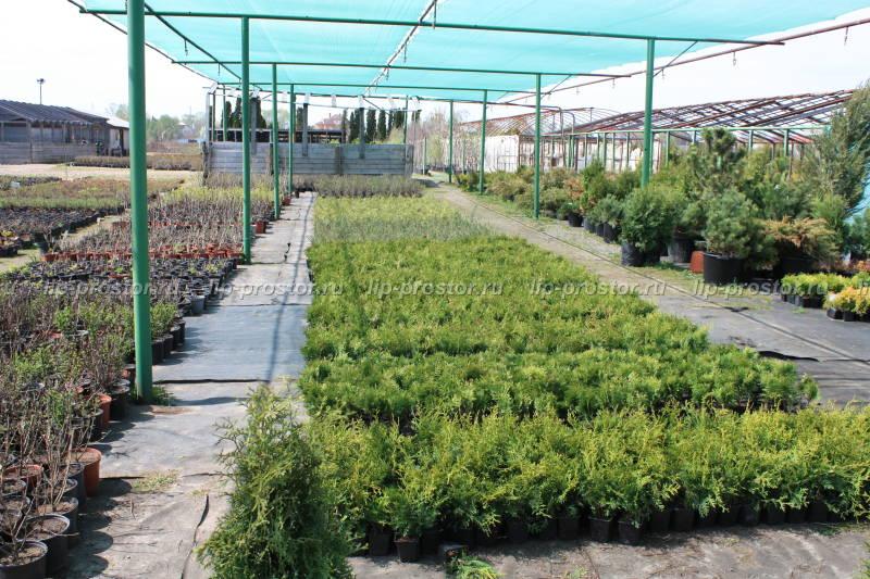 Доставка растений из питомника