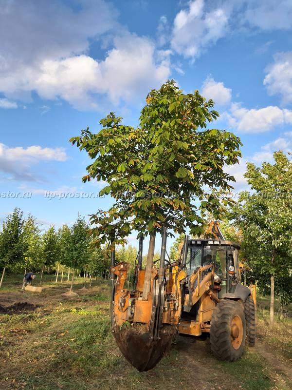 аренда машины для пересадки деревьев